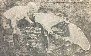 A photo of the pelvis of the Johnstown Mastodon.